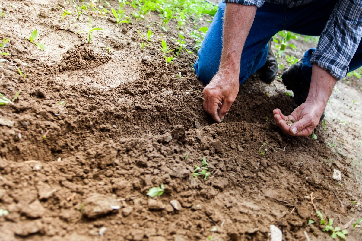 agricultura, fermier, teren agricol, recolta