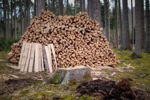 lemne, lemne foc