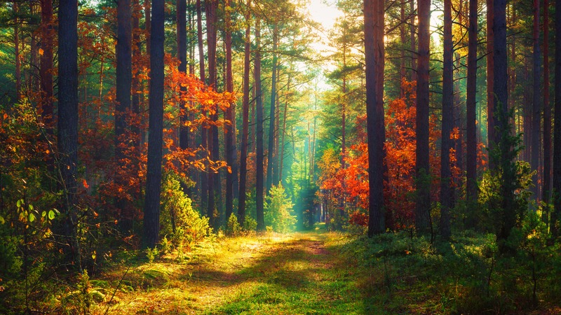 Pădure - Dreamstime